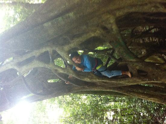 Casa Tranquilo Hostel: Ask them about the Strangler Fig climb!