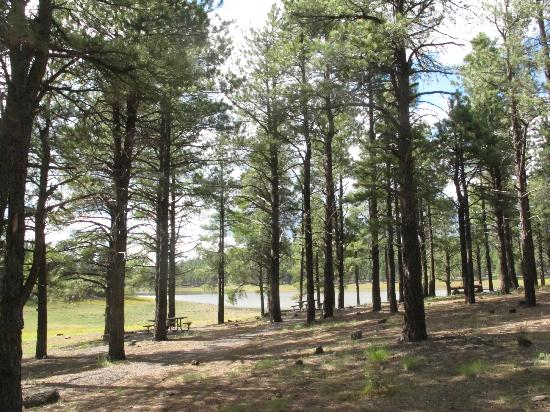 Dogtown Lake Campground: Picnic area, Dogtown Lake