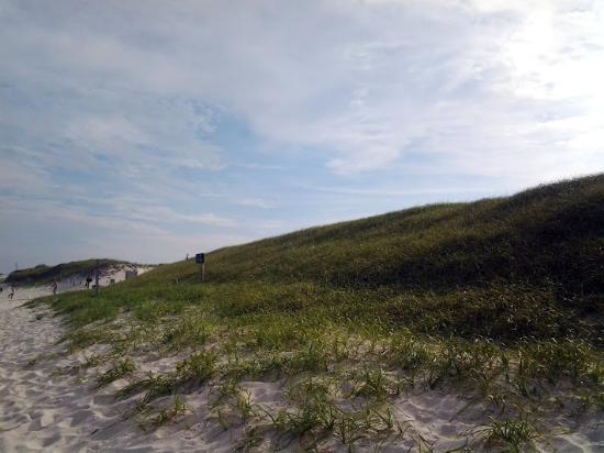 Island Beach State Park: Sand Dunes from the Beach