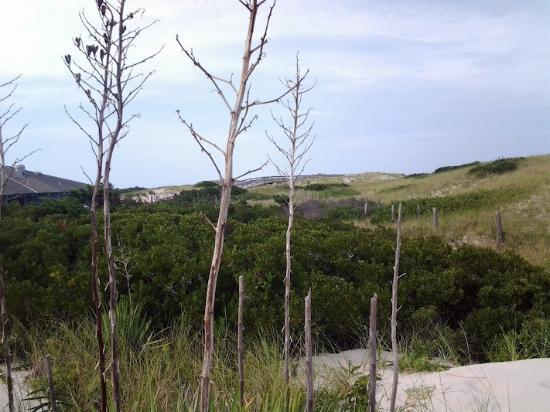 Island Beach State Park: More Wilderness