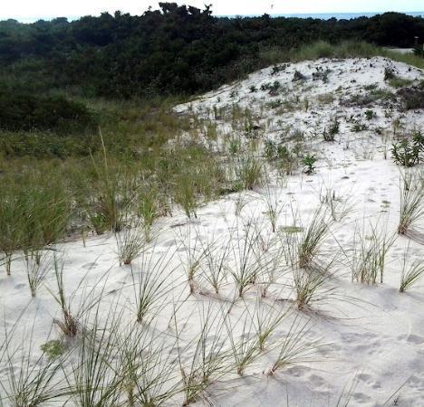 Island Beach State Park: Sand Dunes towards Beach Area 2