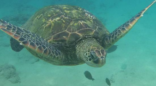 Turtle off Black Rock