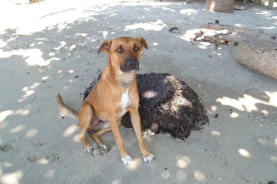 Namua Island Resort: Kali 1