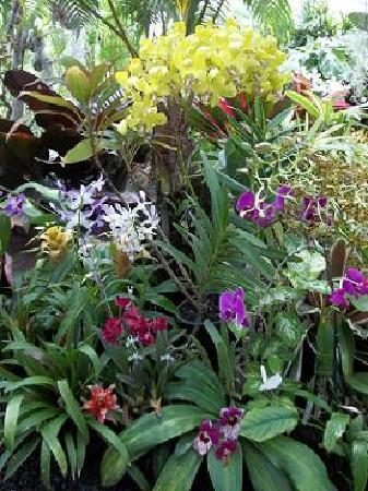 Foster Botanical Gardens: The greenhouse garden.