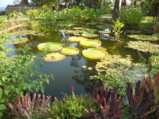 Jardin Botanique et Exotique Val Rahmeh : Stagno con piante acquatiche