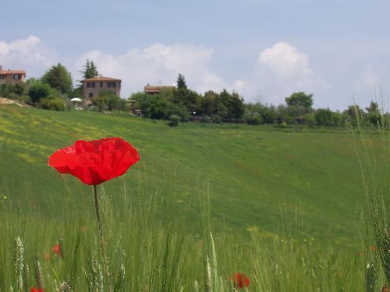 Casale Virgili: La campagna