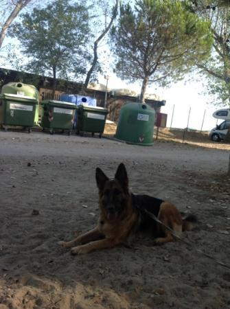 """Punta Spin Residence Camping: Cheryl si domanda :"""" Come mai i cassonetti non li mettono in un area più defilata ?"""""""