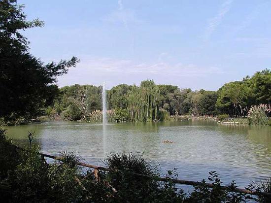 Pineta Dannunziana : Vista interna della Pineta sud (Dannunziana) di Pescara