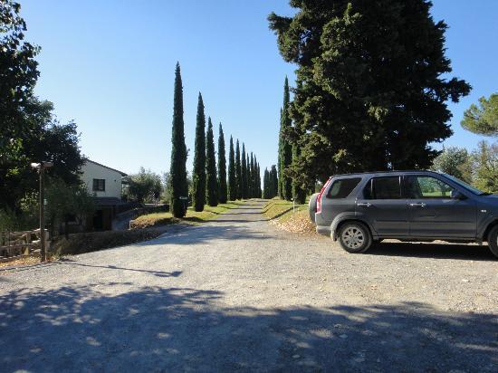 Agriturismo La Sovana: Driveway to la Sovana - fabulous pencil pines.