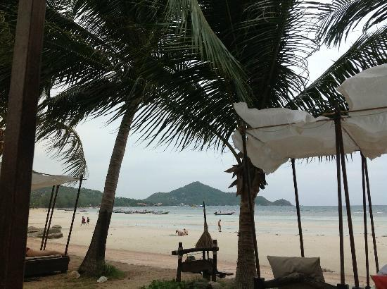كوه تاو كابانا ريزورت: beach