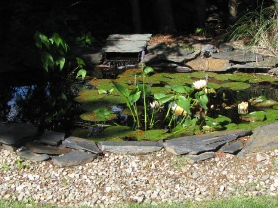 Forty Putney Road Bed and Breakfast: garden pond