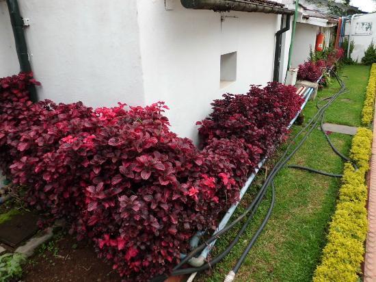 سافوي هوتل: Garden 