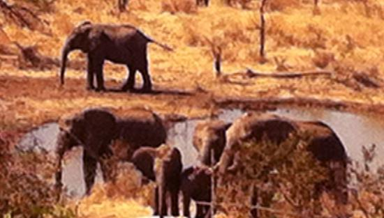 The Elephant Camp: Elephants view from our dinning table