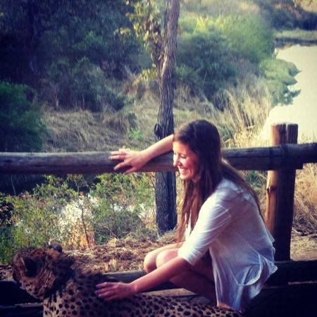 Petting Sylvester, the ambassador cheetah that romes The Elephant Camp
