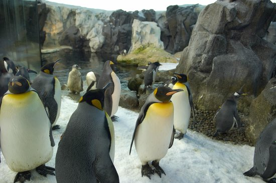 Odense Zoo 2020 All You Need To Know Before You Go With