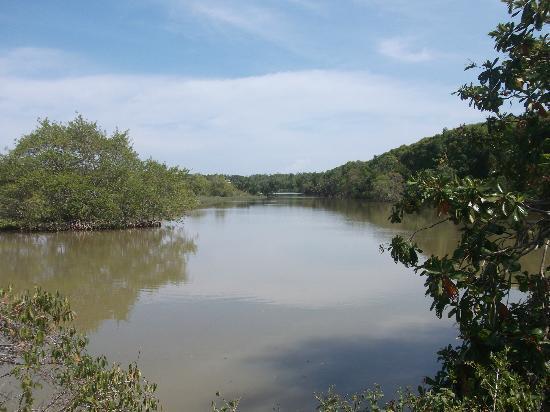 Kuala Selangor Nature Park (Taman Alam Kuala Selangor): man-make lake in the park