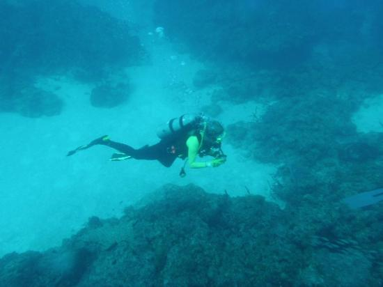 Bimini Big Game Club Resort & Marina: Diving the reefs of Bimini