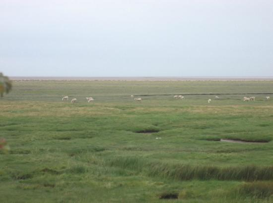 Bay View Holiday Park: view from caravan/ tide out/ sheep on marsh