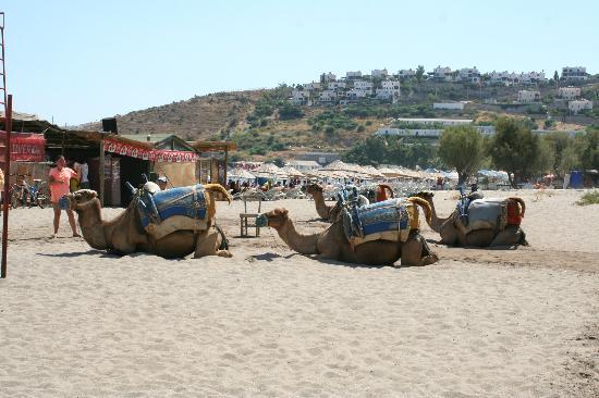 Camel Beach: Kamel beach - cammelli