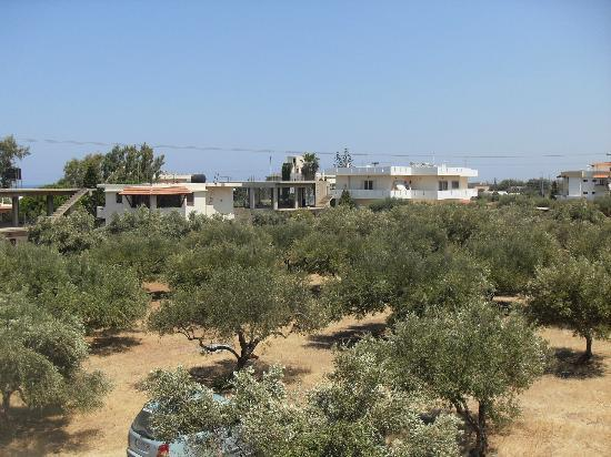 Kleanthi Studios & Apartments: Olive groves