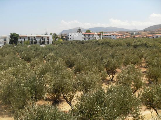 Kleanthi Studios & Apartments: Olive groves all around hotel