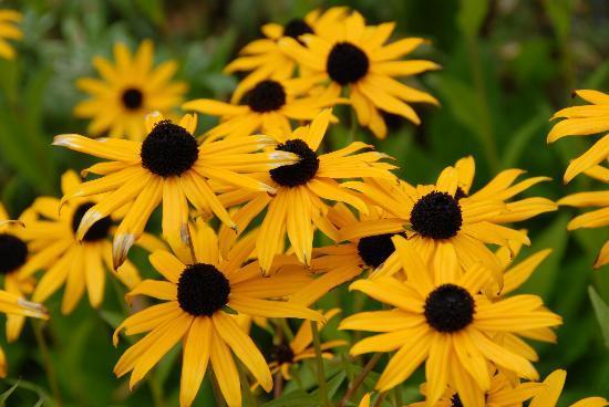 Tyrolean Lodge: Flowers