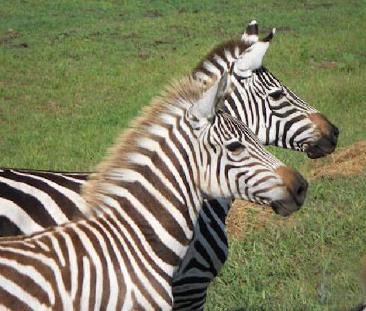 Timbavati Wildlife Park