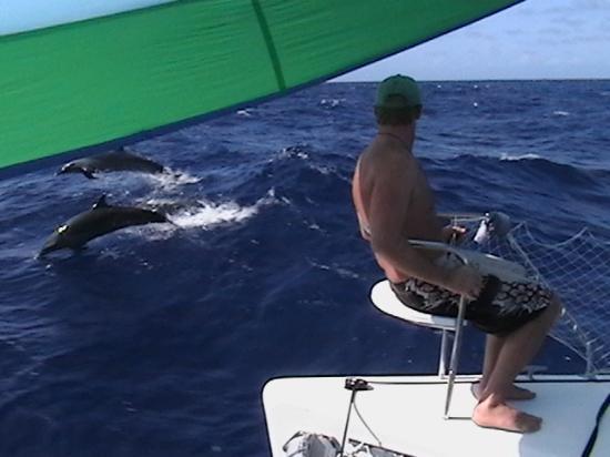 Makana Charters Sunset Dinner Sails: Dolphins