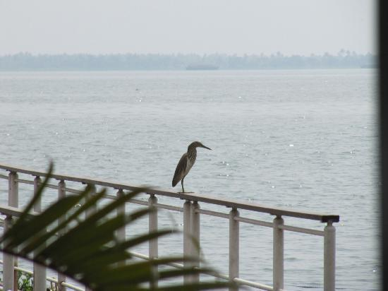 The Park on Vembanad Lake: Watching the world go by!