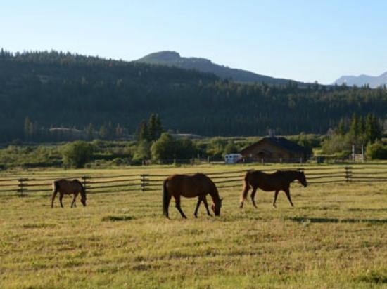 Elkin Creek Guest Ranch: Grazing horses