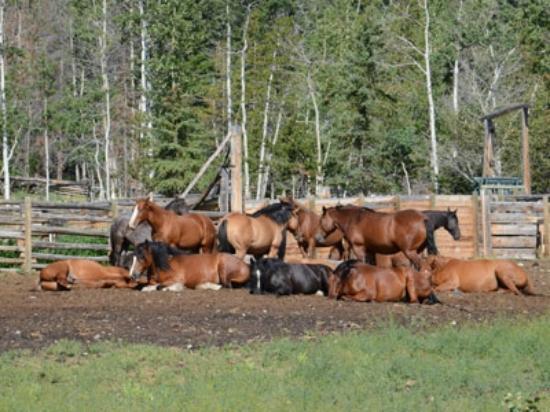 Elkin Creek Guest Ranch 이미지