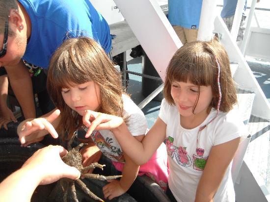 JJC Boats Inc.: Intéressants les crabes