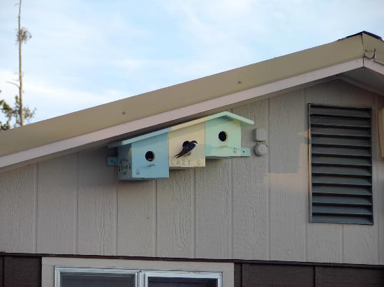 Lazy G Motel: Cute swallow nests on side of office