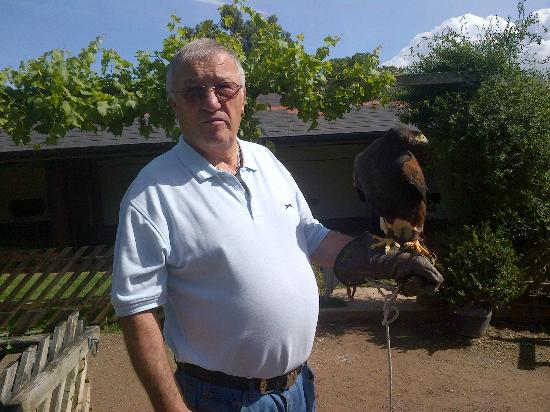 ‪‪The International Centre for Birds of Prey‬: Dad with the Harris Hawk