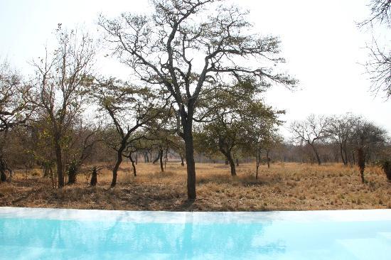 Kapama Southern Camp: Piscina vista savana