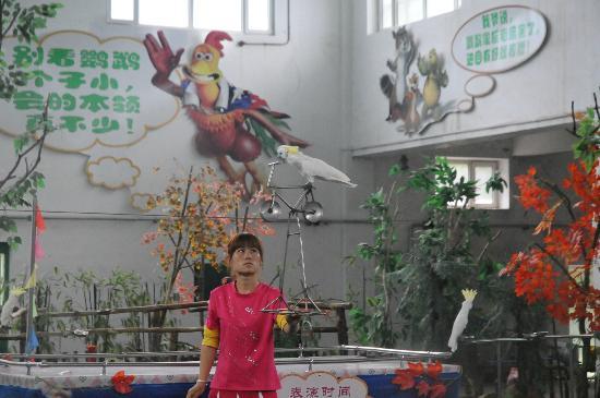 Harbin Zoo: The bird show.