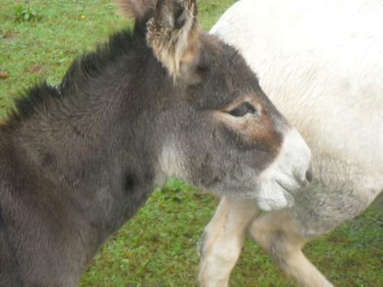 Mill Farm Cottages: Rosie-Shrek and Berties baby!