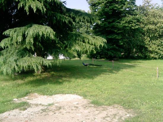 Giardino dell'hotel julia con vista pavone