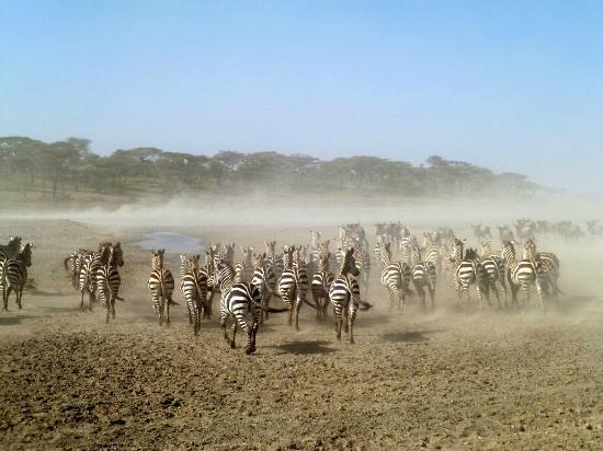 Warrior Trails Day Tour: zebra stampede