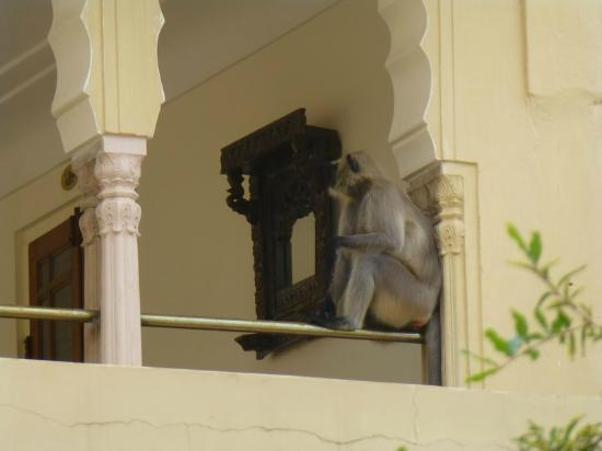 Samode Haveli: Monkey on the balcony of hotel room