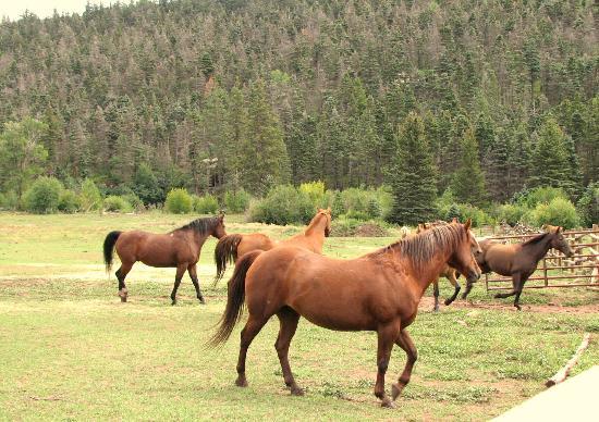 Yellow Pine Livery : Horses
