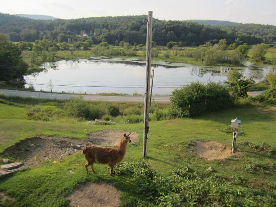 Blueberry Farm Bed & Breakfast: Another look at the view