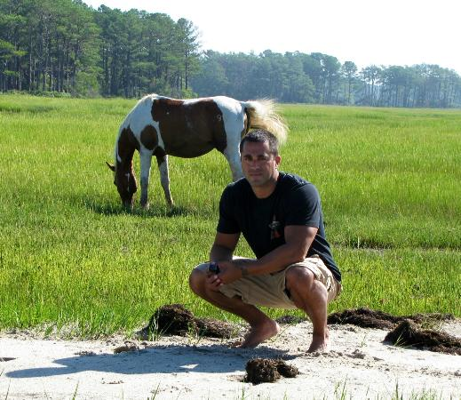 Chincoteague Cruises & Nature Tours: On shore with a pony