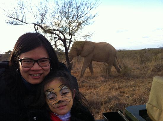 Royal Madikwe Luxury Safari Lodge : Up close and personal with an elephant