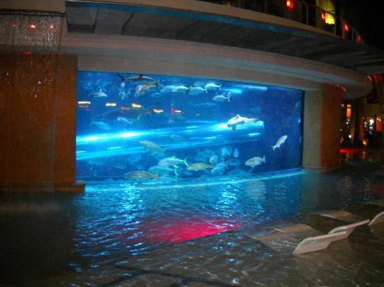 Shark Pool Picture Of Golden Nugget Hotel Casino Las Vegas Tripadvisor