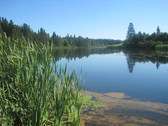New Glasgow Highlands Campgrounds: Walk to the fishing pond from the campsite