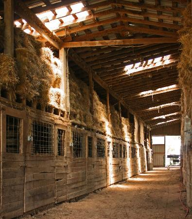 Old Kentucky Home Stables Bed Amp Breakfast Prices Amp B Amp B
