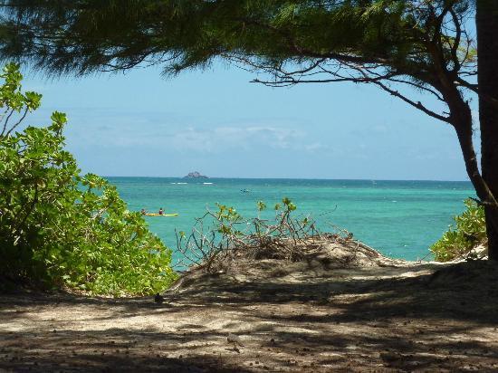 Sharon's Serenity : Kailua Beach