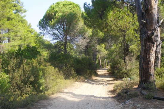 Magda Apartments: Forest path to quiet beaches from Magda