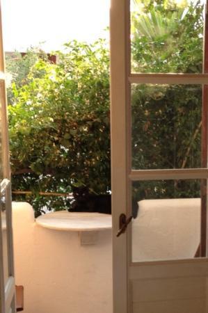 Villa Pinelopi Apartments & Rooms : the cat